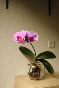 Orchideen (Orchidaceae)